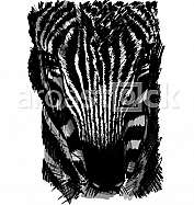 Sketch of a zebra head