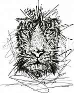 Sketch of tiger face