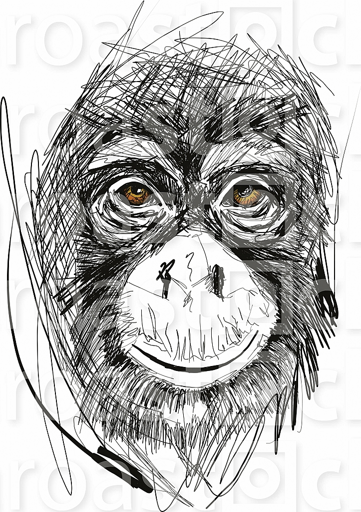Sketch of monkey face