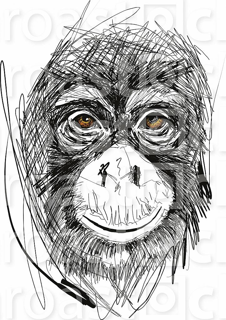 Sketch of monkey face